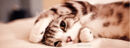 Adorable-kitten-fb-cover-photo.jpg