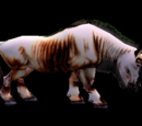 Light Brown Wildebeest