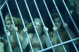 Mermaids Trapped