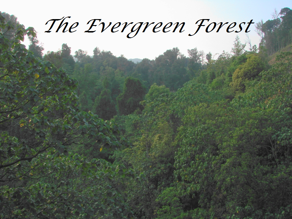 The Evergreen Forest Strikeclan Fanfiction Wiki