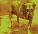 Alice in Chains (album)