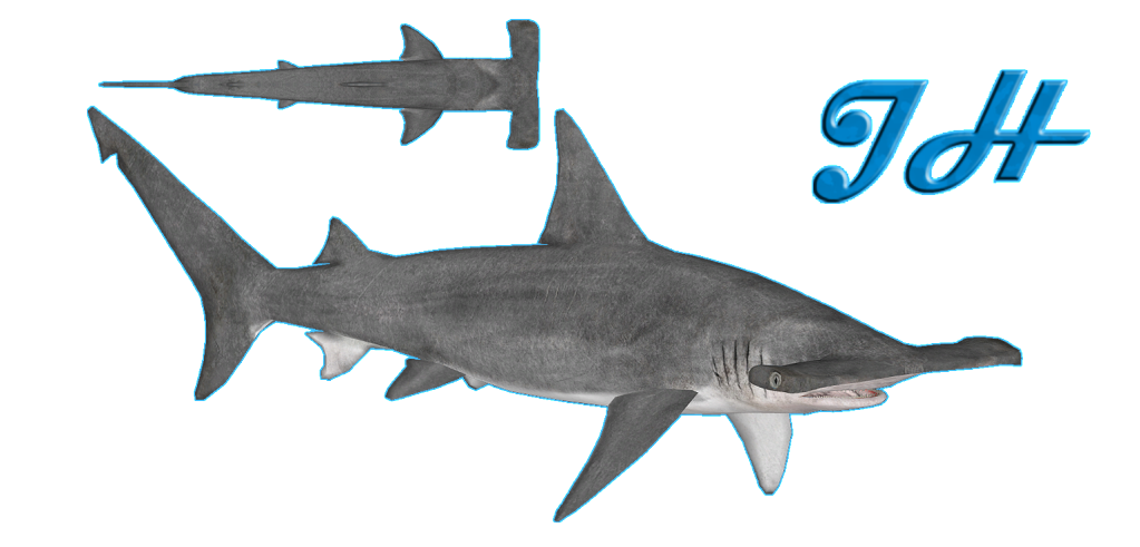 Great Hammerhead Shark Size