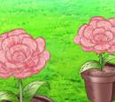 Rose Ham Flower