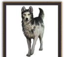 Alpha (Wildhunderudel)