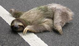 Sloth | Living Dead Dolls | FANDOM powered by Wikia