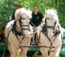 American Cream Draft Horse-Z