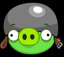 Świnia Kapral