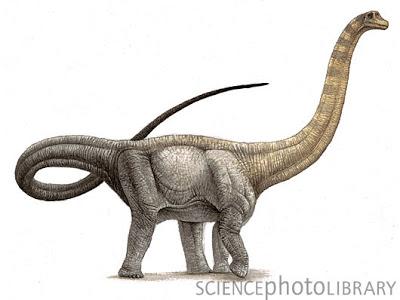 http://img3.wikia.nocookie.net/__cb20130724195050/dinosaurs/images/5/52/Hypselosaurus_priscus_dinosaur,_artwork-SPL.jpg