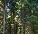 Baltic mixed forests (PA0405)
