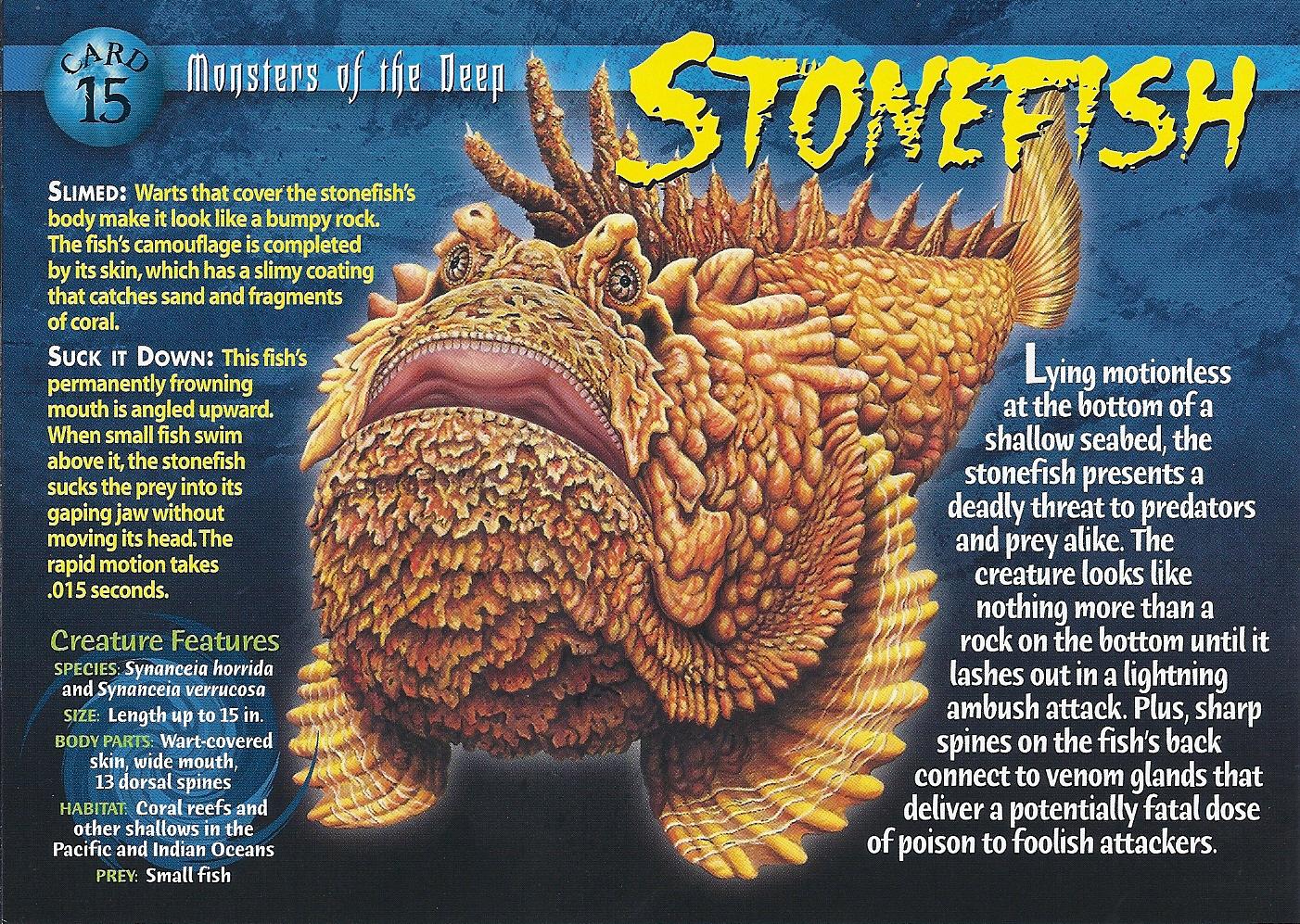 Stonefish Wierd N Wild Creatures Wiki