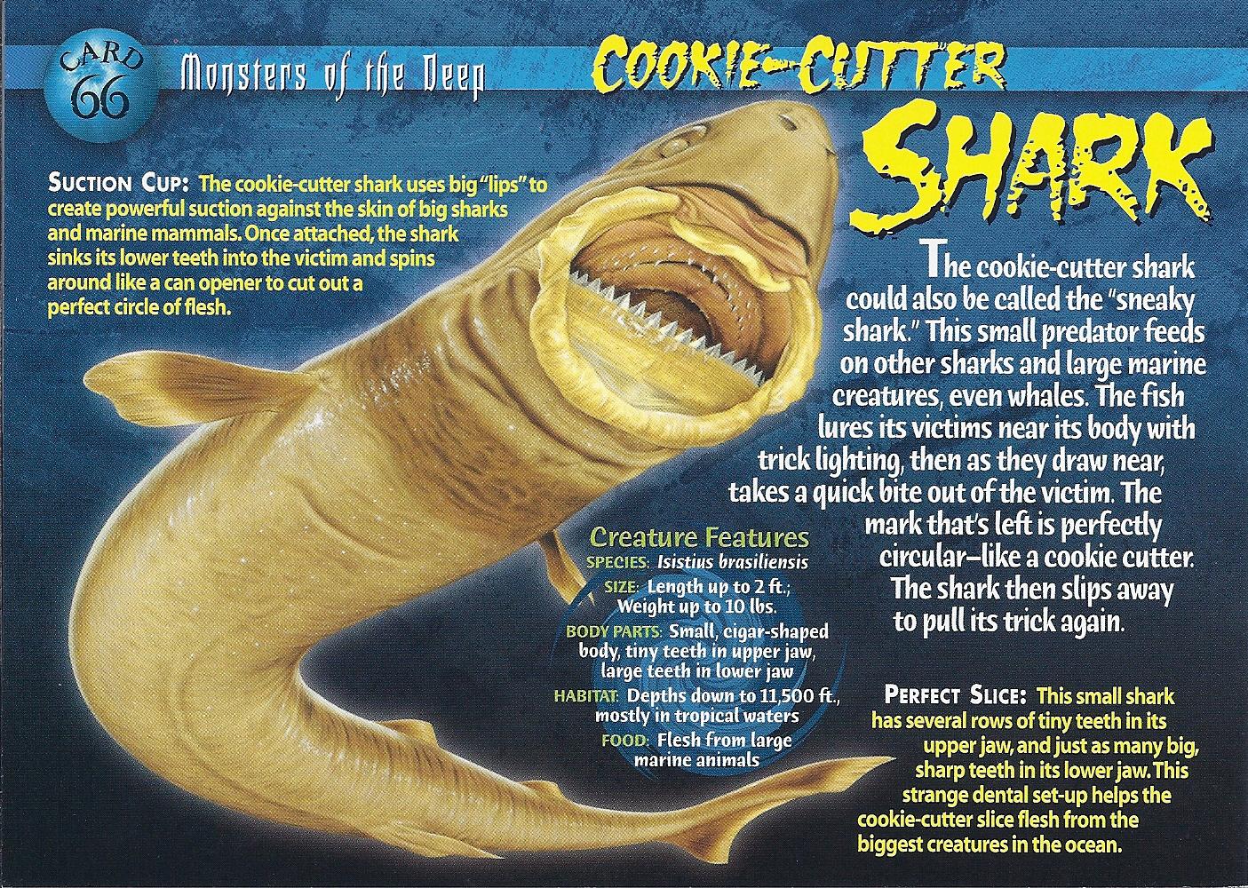 Cookie Cutter Shark Wierd N Wild Creatures Wiki