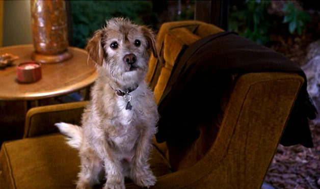 What Type Of Dog Is Baxter From Anchorman