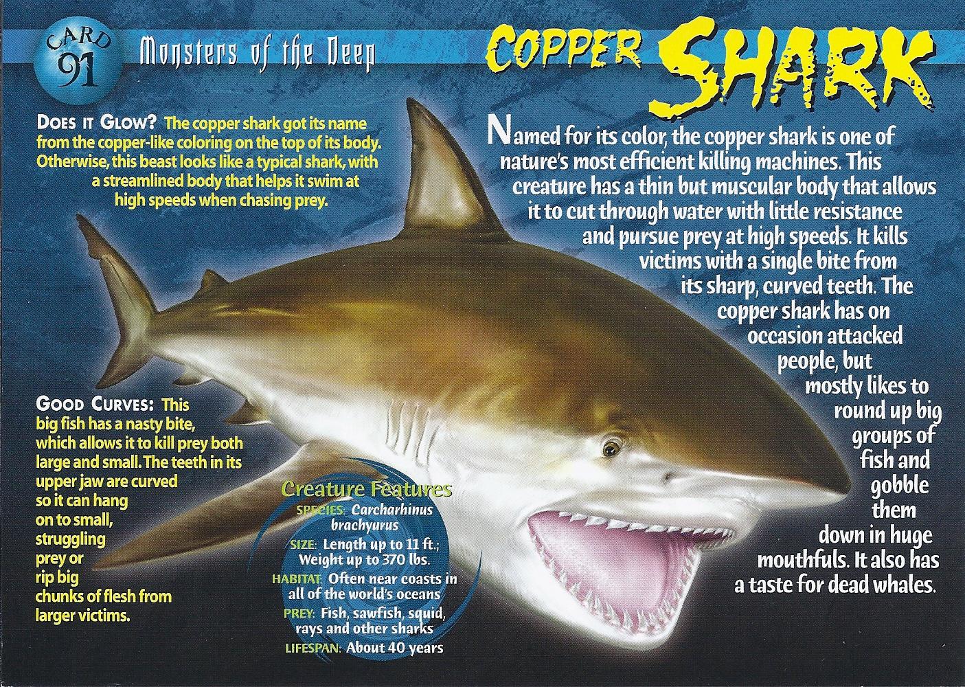 Cookie cutter shark human attack - Animal Kid for Cookie Cutter Shark Human Attack  166kxo