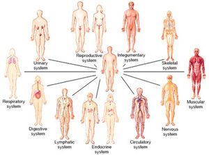 Organ-Systems-01-goog