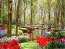 Garden and flowers.jpg