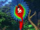 Mainpage-Navmap-Thumb-Red-and-green-Macaw.jpg
