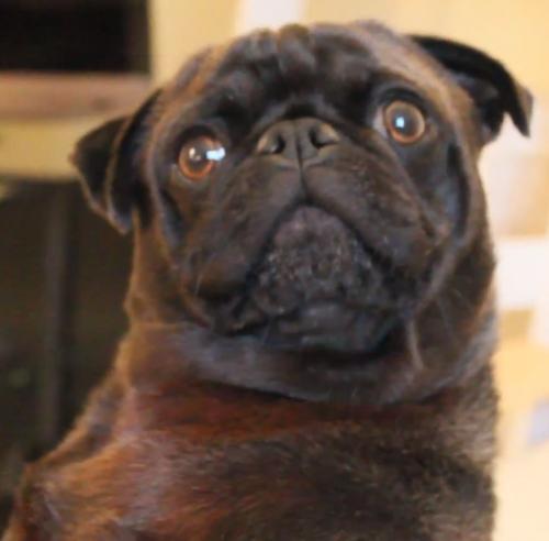 Is Pewdiepie S Dog Edgar Dead