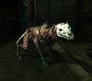 Grabhund