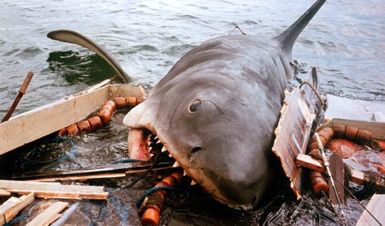 Jaws (shark) - Jaws Wiki