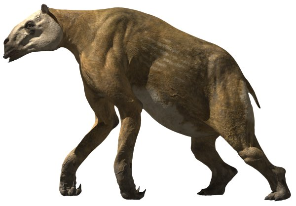 Chalicotherium Walking With Wikis The Free Walking