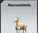 Macrauchenia