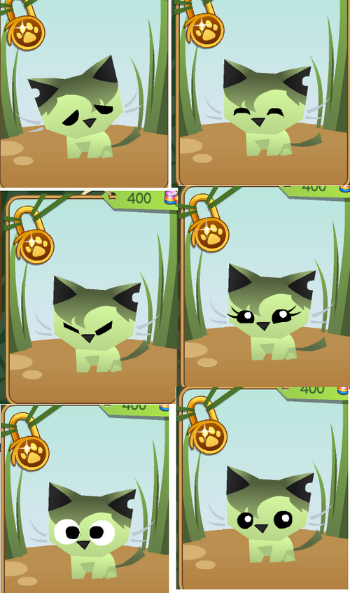 Cat animal jam wiki - Animaljam wiki ...