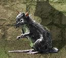 King's Landing Rat
