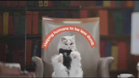 Cat Academy Learn Spanish from Cats.