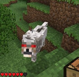 Do Cats And Dogs Fight In Minecraft
