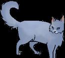Gatos del Clan Estelar