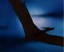 Flugwesen (Ralph Bakshi).png
