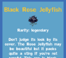 Black Rose Jellyfish