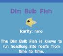 Dim Bulb Fish