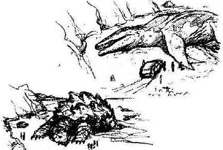 Giant Mosasaur   Wikizilla, the Godzilla Resource and Wiki