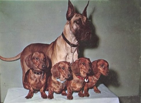 The Ugly Dachshund Details