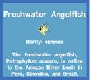 Common Fish
