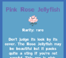 Pink Rose Jellyfish