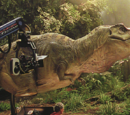 Male Tyrannosaurus rex Animatronics