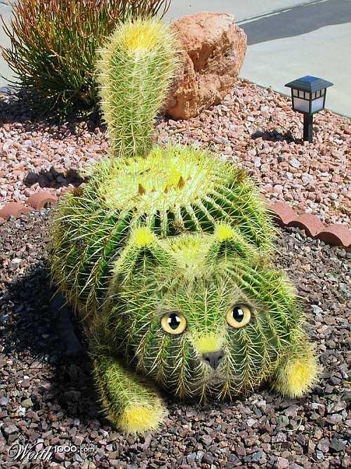 Cactus Cat - Cryptid Wiki - Wikia  Cactus Cat - Cr...