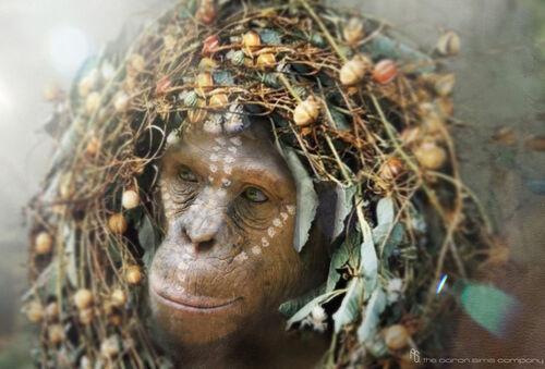 Cornelia - Planet of the Apes Wiki - Wikia
