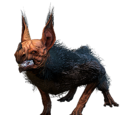Feral Kubrow
