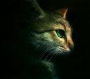Warrior Cats Free Fantasy Wiki