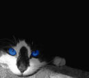 Meow... MEOW... ***MEOW***