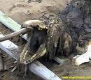 Sakhalin Carcass