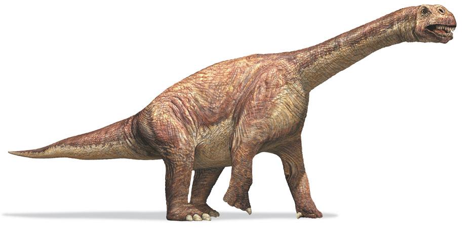 Dino Mystère ! - Page 4 Camarasaurus_sauropod