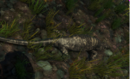 300px-Lizard alive.png