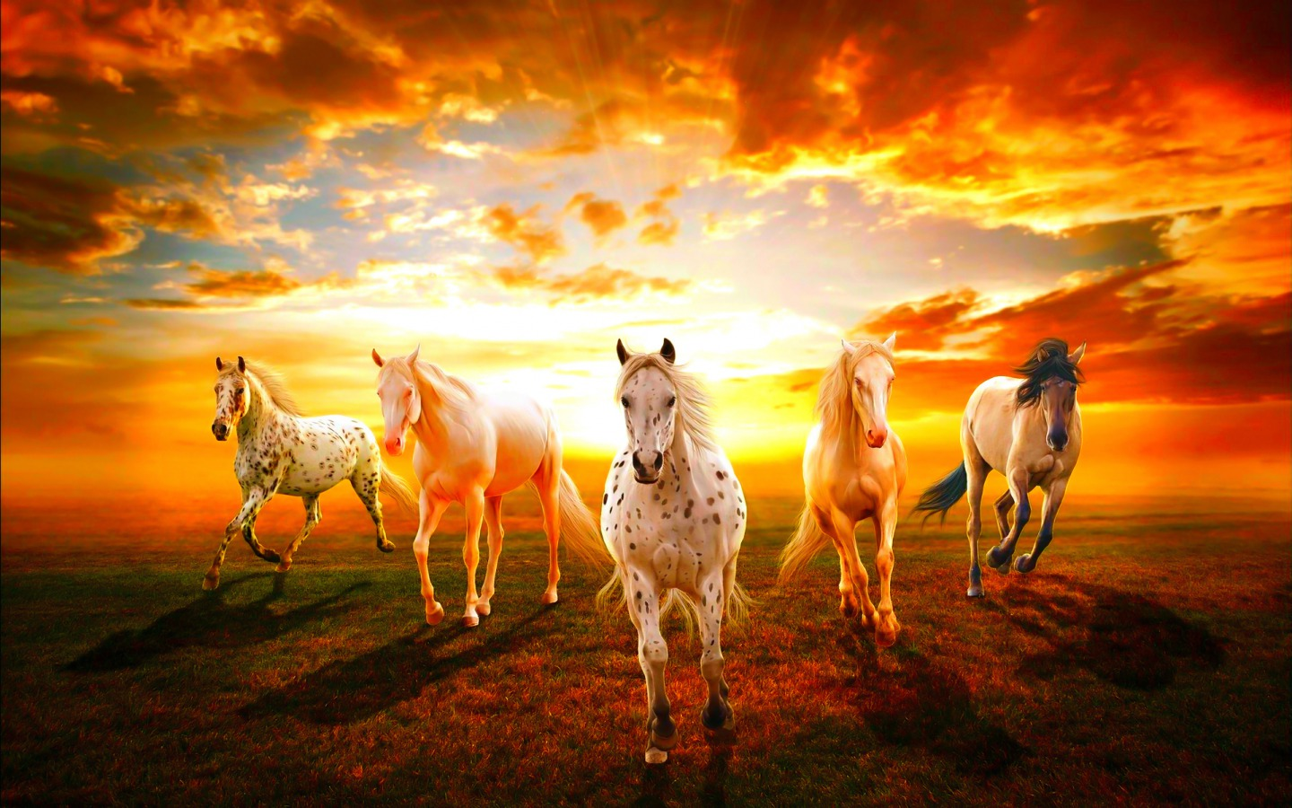 dance map with File Horses Animals 34360440 1440 900 on Game Of Thrones Jason Momoa Audition Tape besides Gold Reef City moreover Stock Image Dj Disco Music Party People Image22215831 in addition scpdca besides The Altamont Stones Concert And Murder.