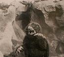 Mongular