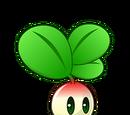 Small Radish