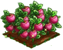 Appleberry extra100.png